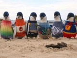 Povestea deosebita a acestor pinguini.