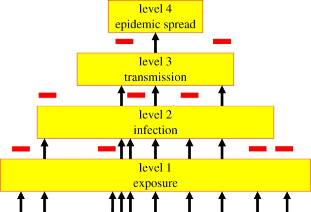 Cum au evoluat virusurile de-a lungul timpului si care este evolutia COVID